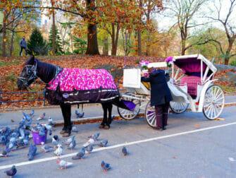 Paseo en coche de caballos en Central Park NYC