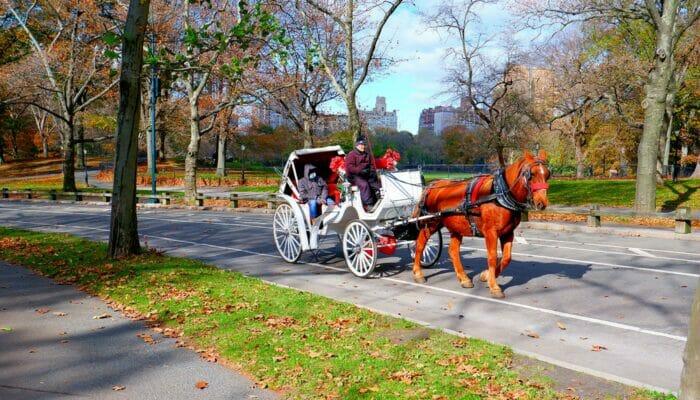 Coche de caballos en Central Park en NYC