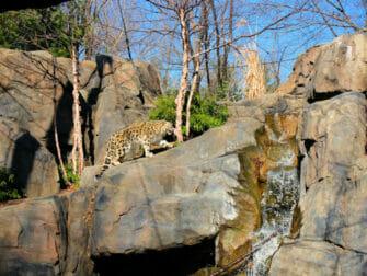 Central Park en Nueva York - Zoo