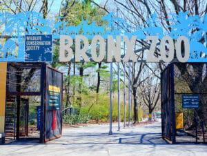Zoo del Bronx