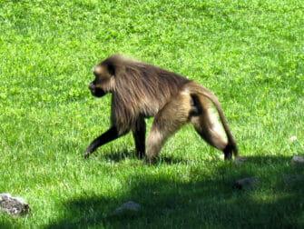 Bronx Zoo en Nueva York - mono