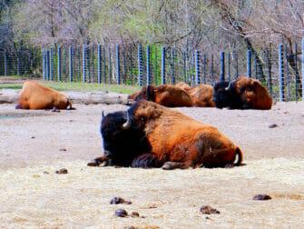 El Zoo del Bronx en Nueva York - Animales relajados