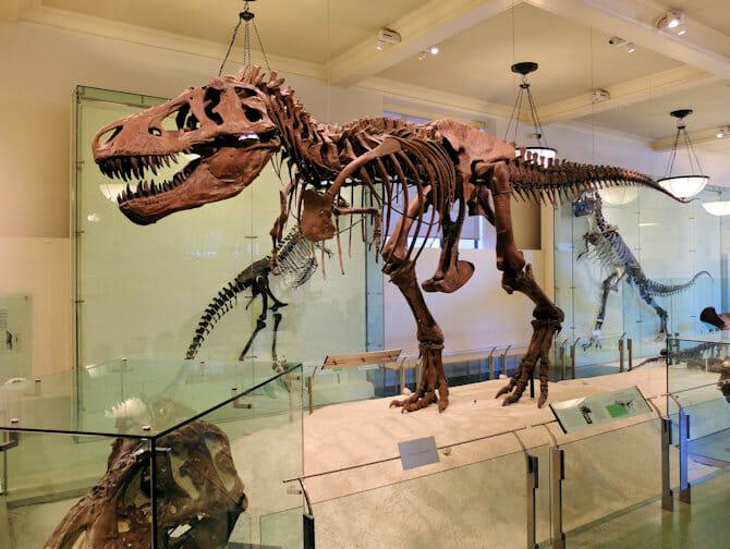 American Museum of Natural History en Nueva York - Dinosaurio