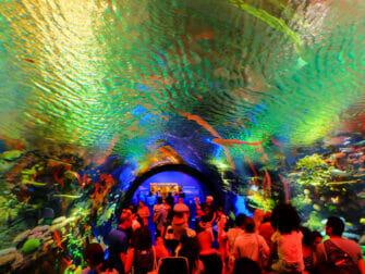 New York Aquarium - Arrecife de coral